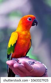 Beautiful Parrot at Malaysia