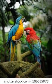 Beautiful parrot posing in camera
