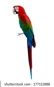 A beautiful Parrot, Red-and-green Macaw, Greenwinged Macaw isolate on white background.