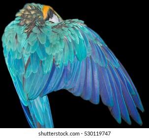 beautiful parrot wings