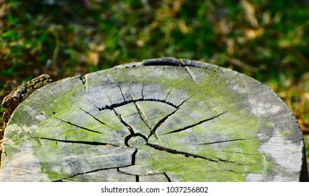 Beautiful part of a green tree with cracks isolated natural object stock photograph
