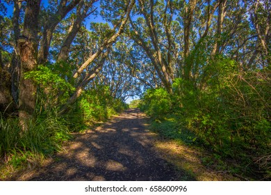 Beautiful passage way to the mountain at volcanic Rangitoto Island, in a sunny day perfect for hiking