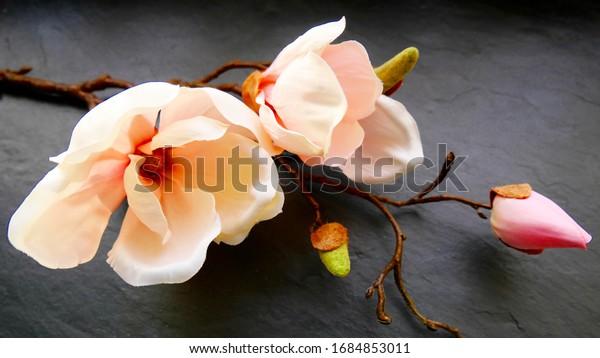 beautiful-pastel-blossoms-close-studio-6