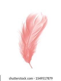 Beautiful pastel soft pink feather flamingo isolated on white background