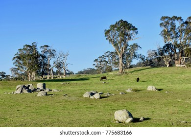 Beautiful pastures in Australia