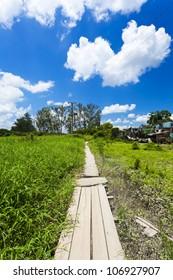 Beautiful path along the meadows