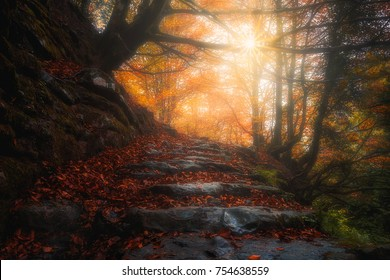 beautiful path in the forest at the autumn