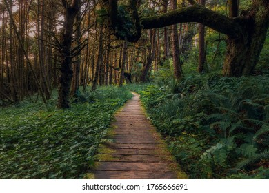 Beautiful path in the forest behind Long beach on Vancouver  Island, British Columbia, Canada.