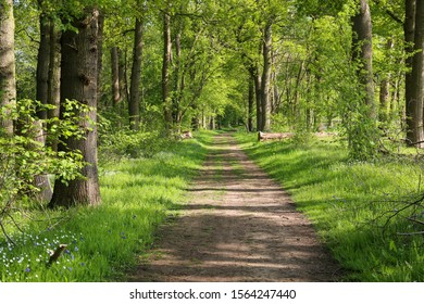 Beautiful path through ancient woodland or forest outside Guildford in Surrey, UK