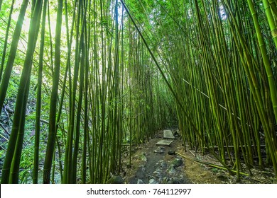 Beautiful path through lush bamboo forest, Maui, Hawaii