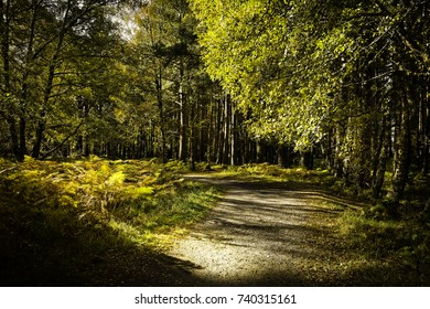 Beautiful path way through Aviemore forest in late summer