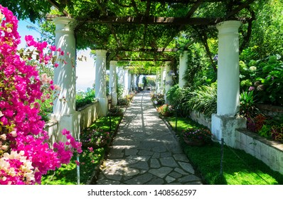 Beautiful pathway in garden with flowers, nature of Capri island, Italy