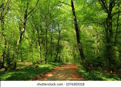 Beautiful pathway in the Teutoburger Wald near Borgholzhausen, Kreis Guetersloh, Westphalia, Natural Preserve Terra vita, Germany