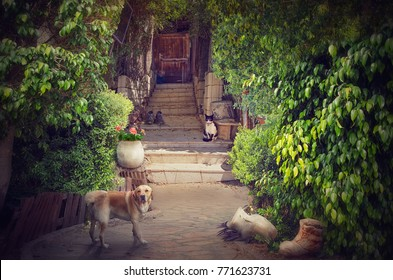 Beautiful patio of an old house. Cosy courtyard surrounded by green lush foliage. A big red dog stands in the foreground looking to the camera. Black-white cat sitting on stone stairs looks at the dog.