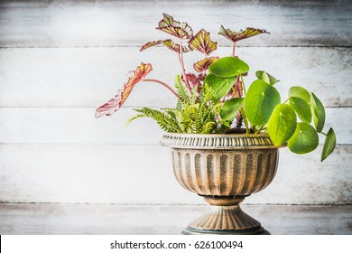 Beautiful patio urn planter with various plants at white wooden wall background, front view. Florist and Container gardening concept. Home decor and flowers arrangement ideas