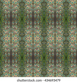 beautiful pattern abstract background texture made from colorful peacock feathers