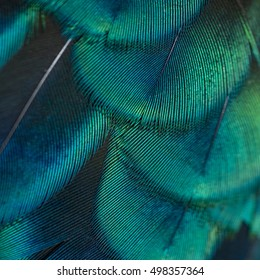 Beautiful pattern abstract background texture made from colorful peacock, peacock feather