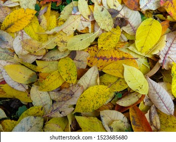 Beautiful pattern of ash leaves.
