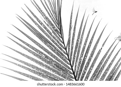 Beautiful pattern of the cocnut leaf pattern, made in black and white style.