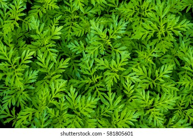 beautiful pattern green leaf background