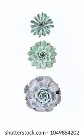 Beautiful pattern of green succulents. Flat lay, top view.  Flat lay, top view.