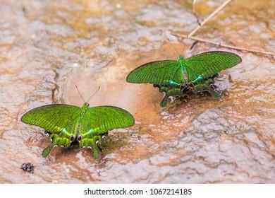 Beautiful pattern on butterfly wings.