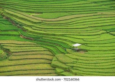 The beautiful pattern of rice terrace at Tule, Mu Cang Chai is a rural district of Yen Bai Province, in the Northwest region of Vietnam.