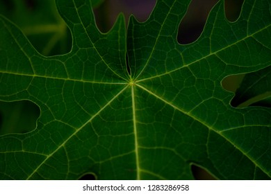 Beautiful pattern of various leaves.