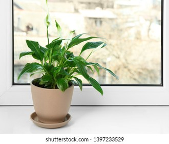 Beautiful Peace lily plant in pot on windowsill at home, space for text