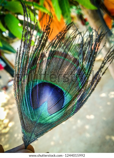 Beautiful Peacock Feather Hd Wallpaper Stock Photo Edit Now