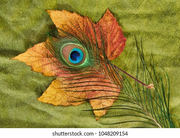 Beautiful peacock feather on a dried maple leaf and green scarf background