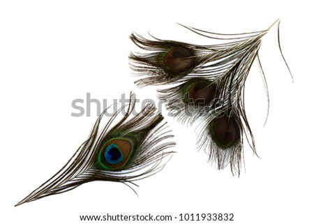 dccc7f35c06a Beautiful Peacock Feathersfour Pieces Three Show Stock Photo (Edit ...