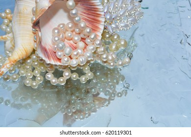 Beautiful pearls and shells reflected in pure water, nature
