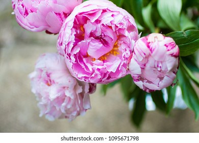 Beautiful peonies in a vase, vintage close up shot