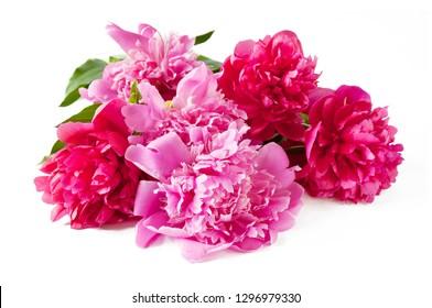 beautiful peony flowers isolated on white background