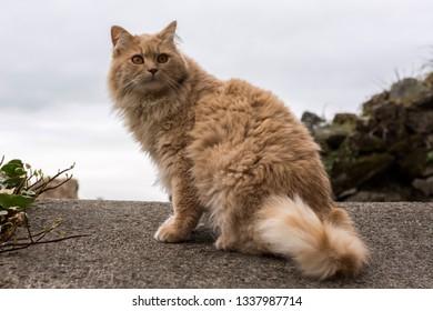 Beautiful Persian cat sitting relaxing outdoors on a terrace