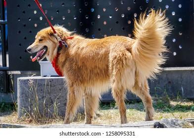 beautiful pet dog at sudbury, ontario, canada