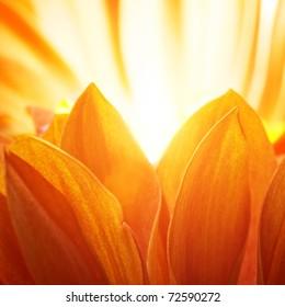 Beautiful petals of an orange flower