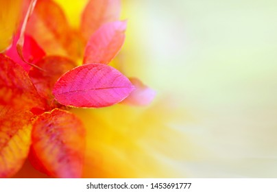 Beautiful photo autumn background red leaves on yellow background photographed close-up.