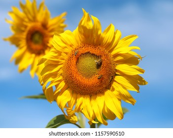 Beautiful photo of a bright sunflower flower against a blue sky