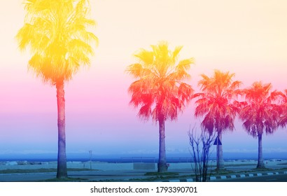 Beautiful photo of colorful palm trees on a Paradise island. Poster for a tourism site or advertising.