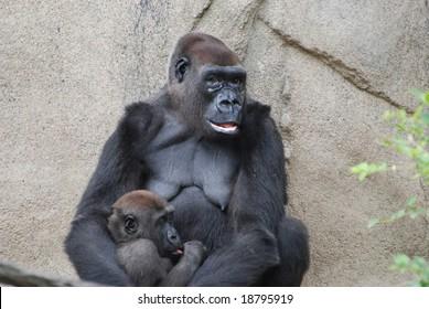 Beautiful photo of a gorilla in the jungle