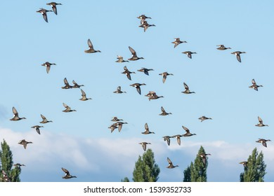 A beautiful photo of a group of flying geese