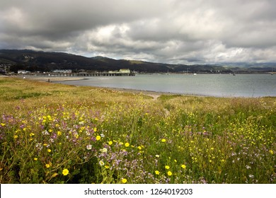 Beautiful photo of Half Moon Bay California, specifically Pillar Point Harbor, with spring wildflower bloom