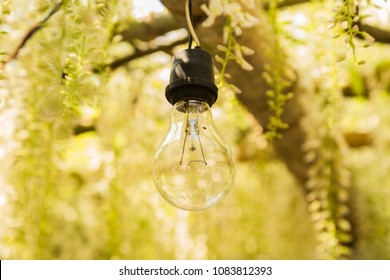 Beautiful photo of a light bulb surrounded by wisteria in soft focus.