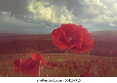 Beautiful photo of a poppy in bloom