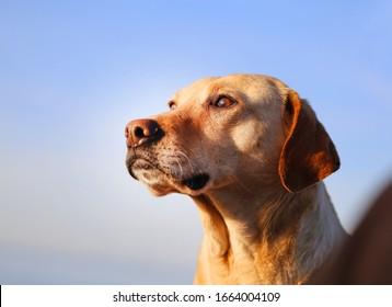 Bel portrait photo d'un chien regardant au loin