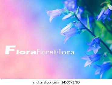 Beautiful photo of purple flowers bells photographed close-up. Floras inscription.