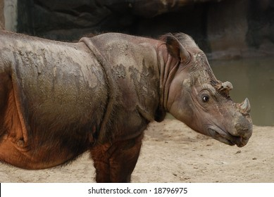 Beautiful photo of a rhinoceros