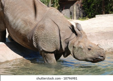 Beautiful photo of a rhinoceros